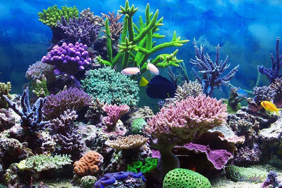 Фантастическая красота подводного мира - ПоЗиТиФфЧиК - сайт позитивного настроения!